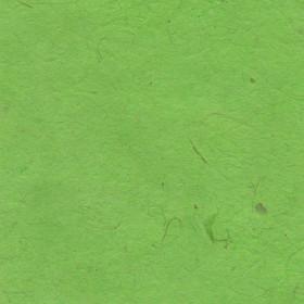 Lokta verde